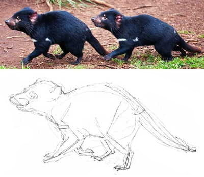 Tasmanian devil  drawing tutorial