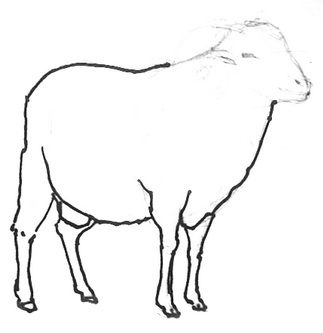 Sheep drawing step by step