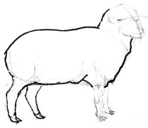 Sheep drawing stepby step