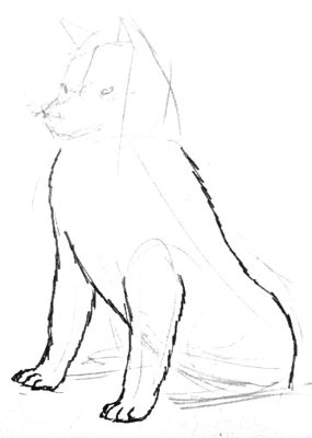 Sitting  husky step by step drawing