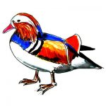 Mandarin duck colored drawing