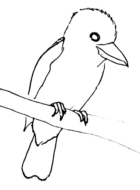 Kingfisher- Kookaburra line drawing