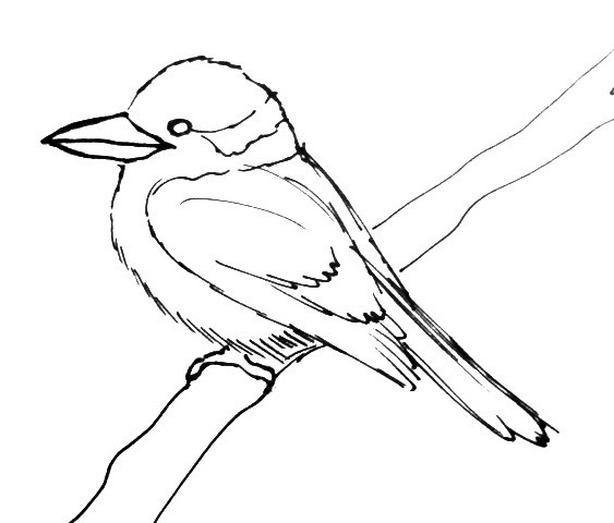 Kingfisher- Kookaburra   outline