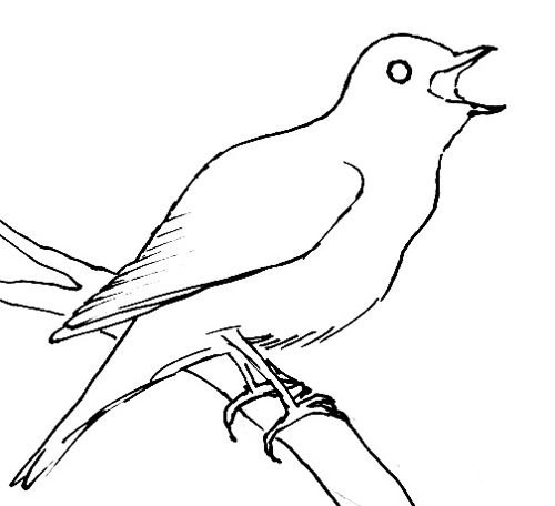Nightingale   line drawing 2