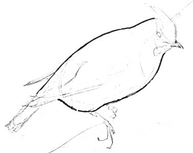 Waxwing drawing lesson