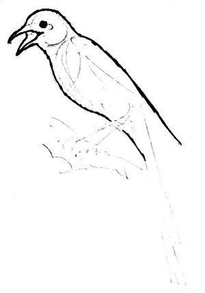 Magpie drawing lesson