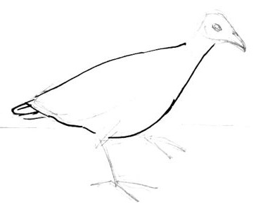 Corncrake  boy drawing