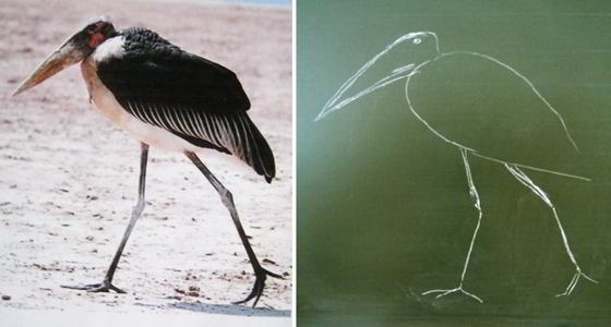 How to draw marabou with chalk