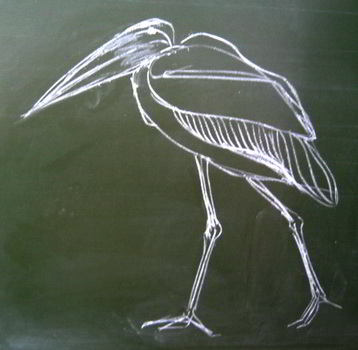 Marabou drawing with chalk
