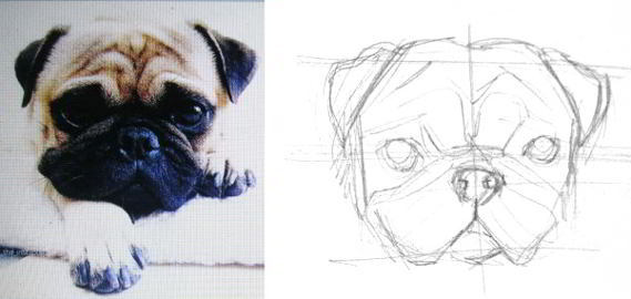 How to draw pug head and face