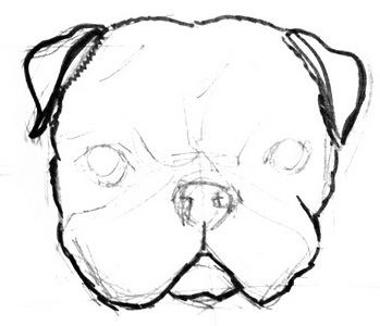 Pug head drawing lesson
