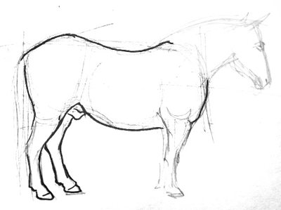 Horse drawing in profile