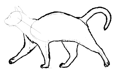 How to draw a cat in profile