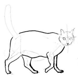 Walking cat drawing step by step