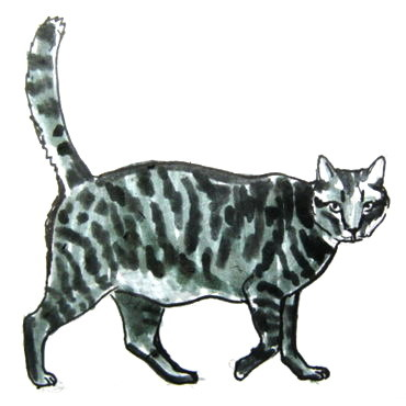 Cat colored drawing