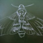 How to draw a death's head hawk moth tutorial
