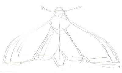 death's-head hawk moth drawing lesson