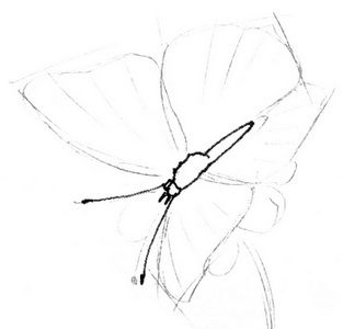 Sitting butterfly drawing step by step