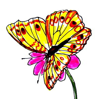 Butterfly on a flower colored drawing