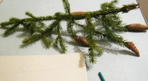 Fir branch drawing from nature