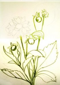 Dahlia drawing step-by-step