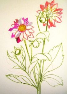 Dahlia drawing instruction