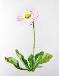 Daisy step-by-step painting