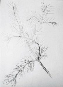 Pine drawing step-by-step