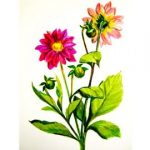 How to draw a Dahlia flower step by step