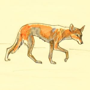 Walking Dingo colored picture